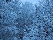 Magical winterland