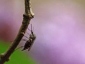 Super Pest