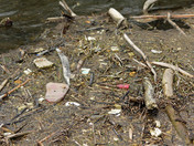 Trashing Our River