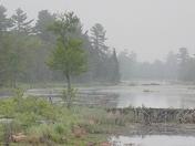 Spring Buck at pond