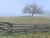 The Fence, Fog and Field