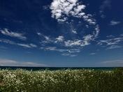 The Lake-shore