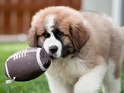 6b. Football Puppy