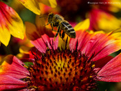 Busy Buzzing Bee
