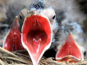 1c. Angry Bird