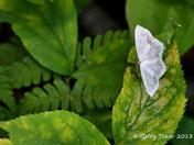 Resting Moth