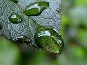 Raindrop on a Leaf