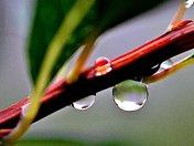 Spherical Raindrop on a Leaf