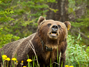 Bear 122