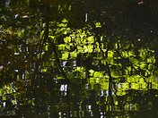 Reflections in the Shubie Canal