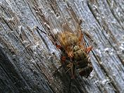 Fly on a Fence