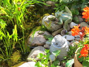 Pond frogs enjoying a sunny day
