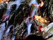 Silky Water Fall