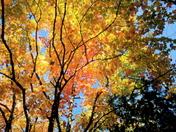 Opulent October