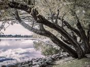 Falling into Henderson Lake