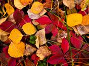 Fallen Colours