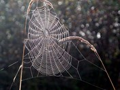 Nature's lace