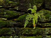 Fern And Moss/Dundas Valley Cons./Dundas On