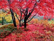 Autumn in BC