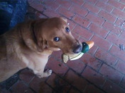 Ruby and her duck.