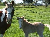 new baby pony 023.jpg