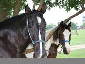 horses, pool pics 024.jpg