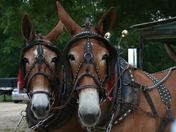 horses, pool pics 037.jpg