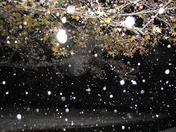 Snowfall & the Sweet Gum Tree