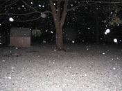 Winter Wonderland in the backyard