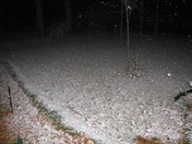 Snow covering the leaves in Jackson
