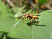 Hybrid Wasp