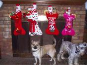 Christmas morning 2007