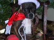 Miss Dixie - a broken leg for Christmas
