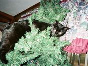 Booger in tree.jpg