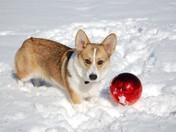 Callie's First Snow