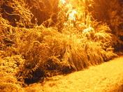 Crystal Springs Snow