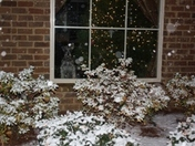 Little Doggy In The Window