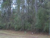 Snow Flurries Dec 7 2011