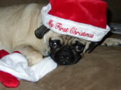 Trooper's First Christmas