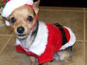 Santa's Tiny Helper