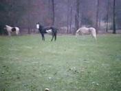 My horses in the snow in Brandon.