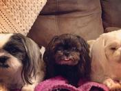 Bandi, Trixie and Angel