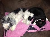 Sleeping in harmony