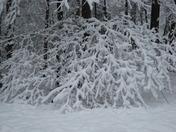 Snow in Backyard Brandon