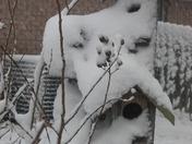 Lombardi Gras and February Snow 044.jpg