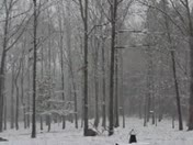 Snow in the woods of Kosciusko, MS