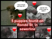PLEASE HELP THESE PUPPIES !!