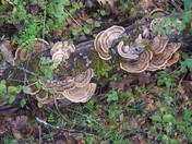 Spring Fungus