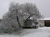 Sonora Snow 3.22.09
