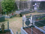 2010 Veggie Garden